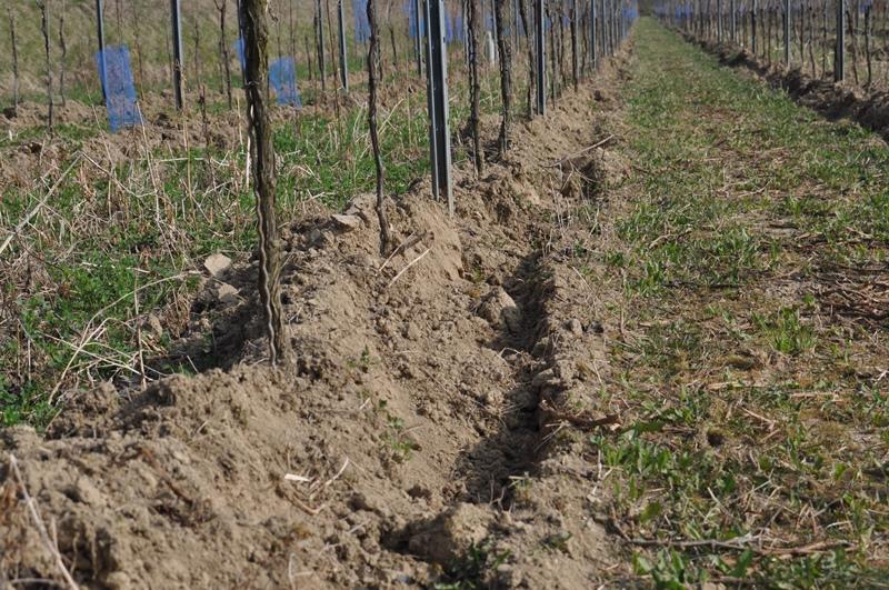 Bodenbearbeitung im ökologischen Weinbau - Bombacher Sommerhalde